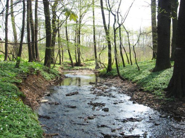 Rokytka v přírodní rezervaci Mýto