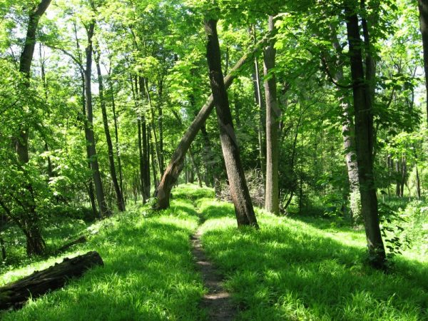 trasa naučné stezky Slatinná louka Liblice - zámek Liblice